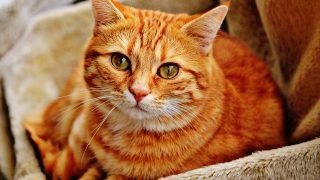 夢占いの子猫の意味(たくさん・死ぬ・飼う・助ける・子犬・噛まれる)