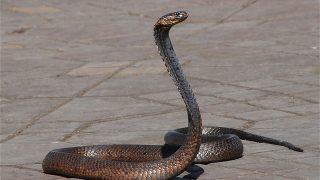夢占いの蛇の意味(食べる・たくさん・脱皮・黒・青・茶色・猫・逃げる)