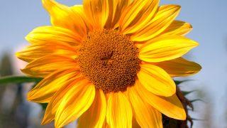 オーラが黄色の意味とは?性格・相性・恋愛の特徴