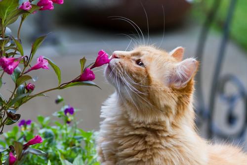 告白される猫と花の画像