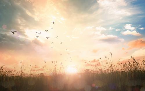 告白される朝焼けの画像