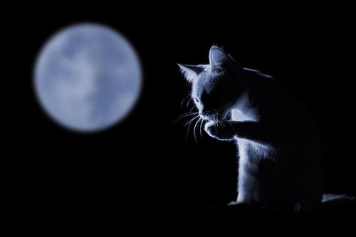 即効絶対に確実に連絡が来る待ち受けの可愛い猫と満月