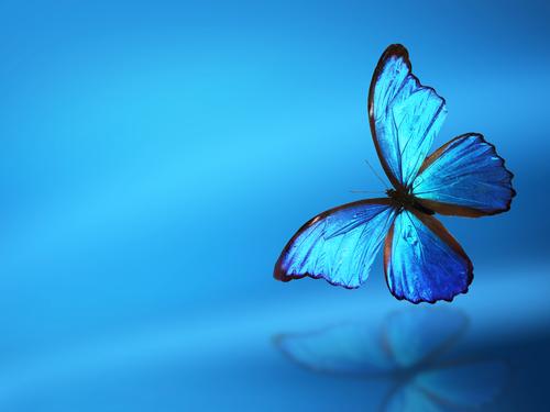 速攻でlineがくるおまじない待ち受け画像の青い蝶々
