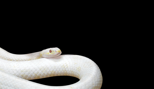開運のための城蛇の待ち受け画像
