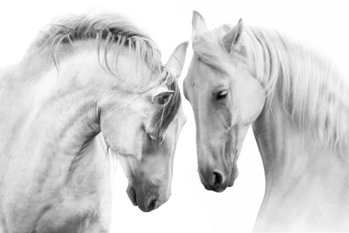 恋が叶う馬の画像