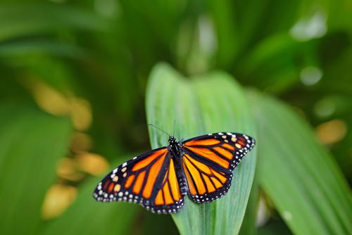 友人との人間関係を良くする蝶の画像