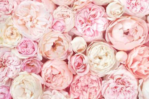 邪気払いする花の画像