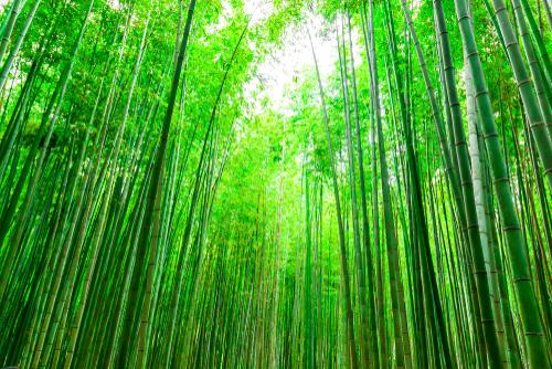 心を落ち着かせる竹林の待ち受け画像