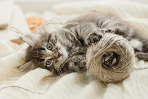 心を落ち着かせる猫の待ち受け画像