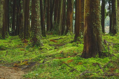 心を落ち着かせるコケの生えた森林の待ち受け画像