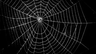 蜘蛛や蜘蛛の巣のスピリチュアルな意味とは?見る時間帯や場所や色などでわかるスピリチュアルメッセージ