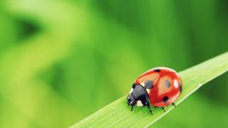 てんとう虫のスピリチュアルな意味とは?宝くじ当選や恋愛成就など開運のお告げのてんとう虫の霊的なメッセージ【体験談有り!】