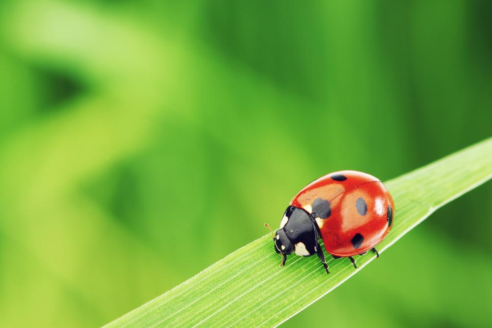 てんとう 虫 の お告げ スピリチュアルな観点でのてんとう虫について