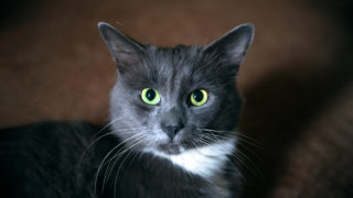 猫のスピリチュアルな意味とは?黒猫・茶トラ・三毛猫・白猫など毛色などでわかるスピリチュアルメッセージ