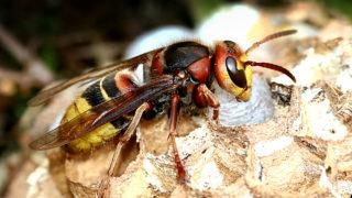 蜂のスピリチュアルな意味とは?行動や見た場所や種類(アブ・アシナガバチ等)でわかるスピリチュアルメッセージ