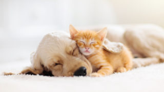 動物に好かれる人・嫌われる人のスピリチュアルな意味とは?共通する特徴や霊感との因果関係などのスピリチュアルなメッセージ