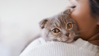 猫が寄ってくる人のスピリチュアルな意味とは?猫に好かれたり猫との縁がある人のスピリチュアルなメッセージ