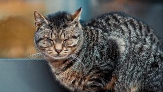 猫帰ってくる強力なおまじない!帰ってこない猫が必ず無事帰ってくる方法【高確率】