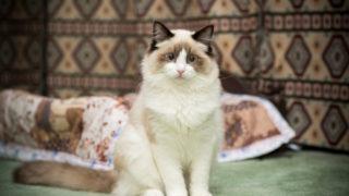 死んだ猫が会いに来る…ペットロスのあなたへ。亡くなった猫に会う方法